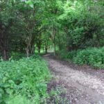 leddys wood may 20111